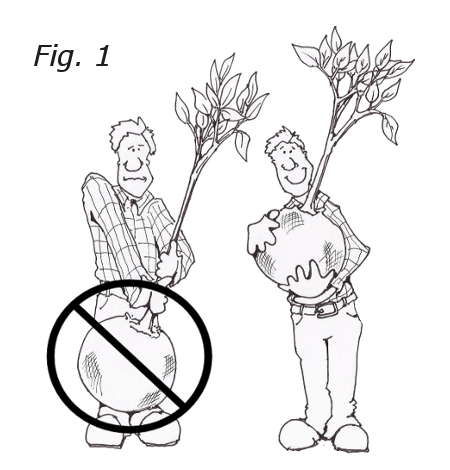 How To Plant Trees Step By Step Guide To Planting Trees